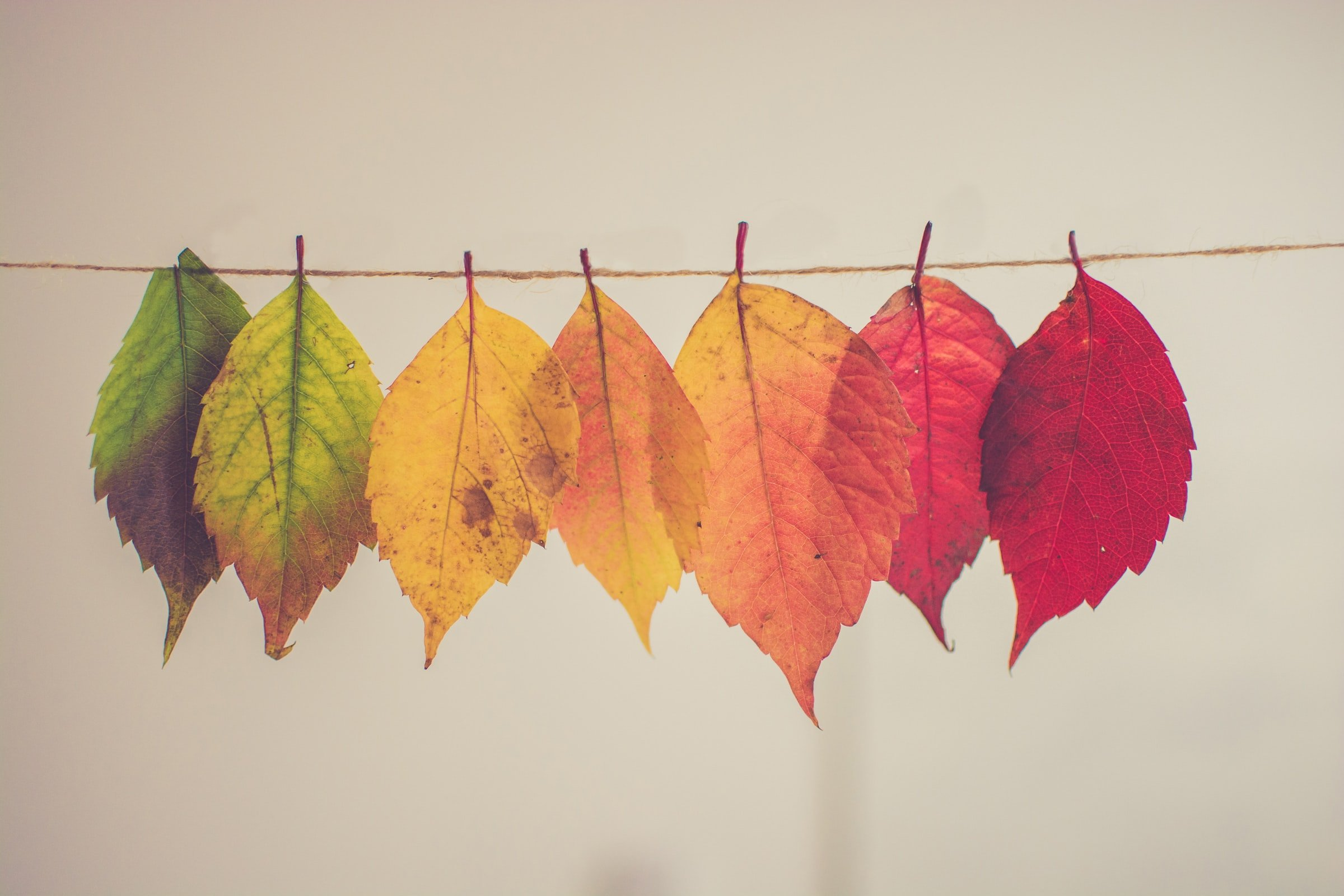 Leaves of different colours